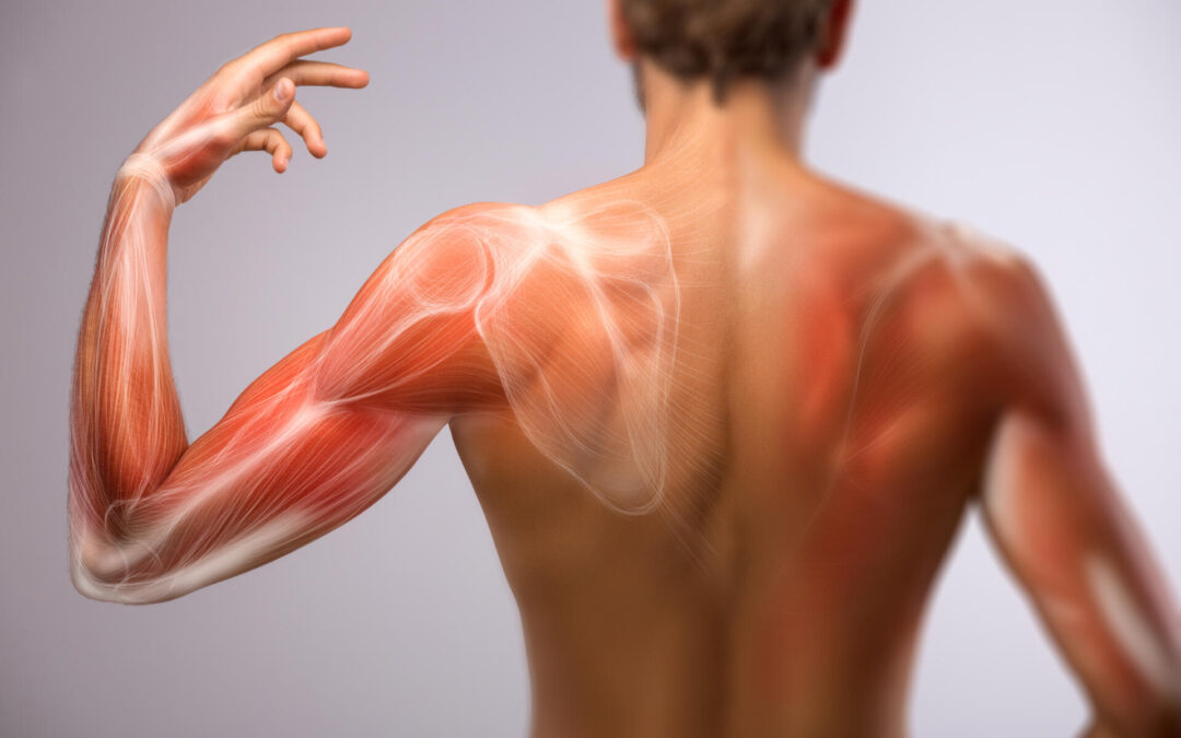 Muskelschwund  – ein Problem unserer Zeit!