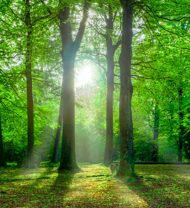 """""""Waldbaden"""" Im Wald das Immunsystem stärken!"""