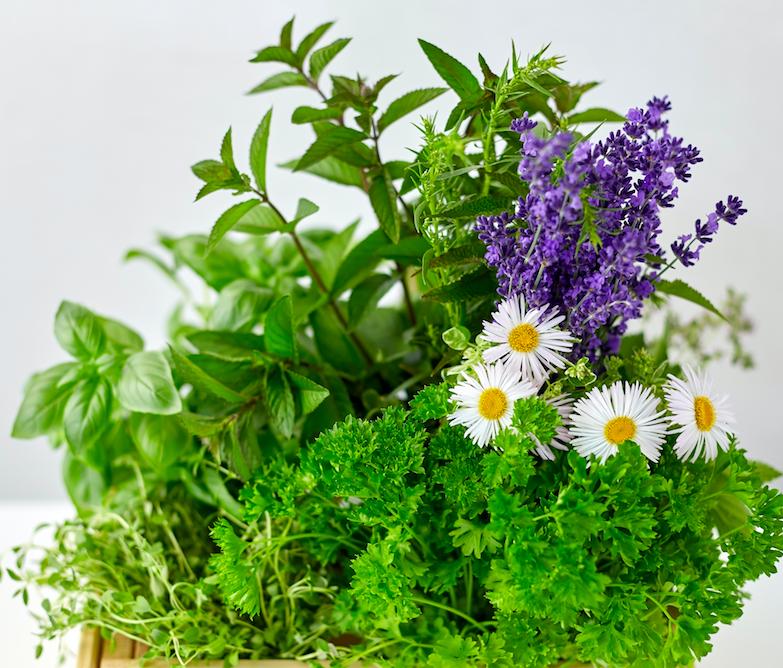 Tips für schmerzfreies Gärtnern